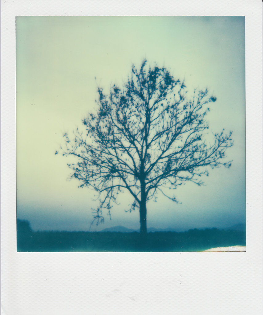 tree-101.jpg